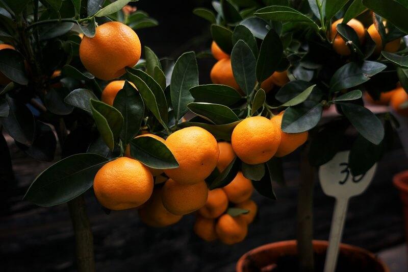 diasima-piata-clementines