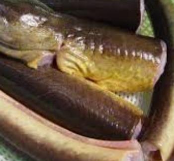 Χέλια μπουργέτο (από το Μεσολόγγι), της Λίνας Βλαχάκη