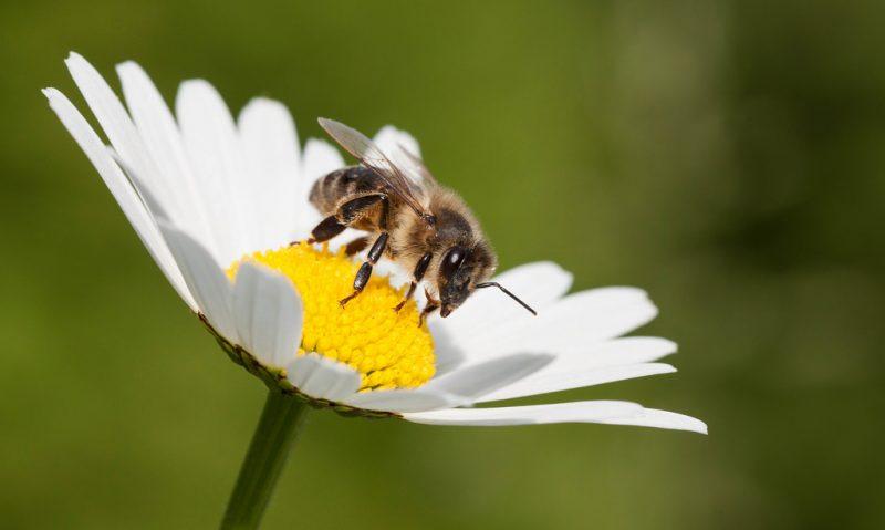 Μέλισσα η θαυματουργή-featured_image