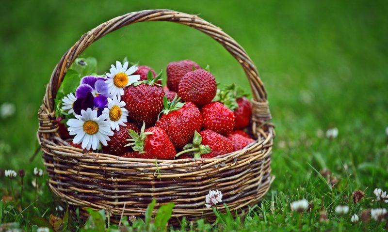 Μυστικά για φράουλες: επιλογή, καθάρισμα, συντήρηση-featured_image