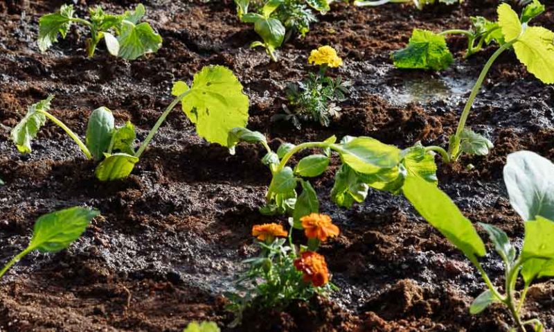 Πώς φτιάχνουμε έναν μικρό λαχανόκηπο για καλλιέργεια λαχανικών, του Κώστα Λιονουδάκη-featured_image