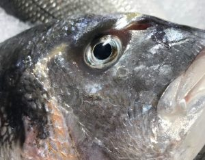 πως αναγνωριζω το φρεσκο ψαρι
