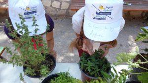 Το πρόγραμμα περιελάμβανε την κεντρική εκδήλωση στους Αμπελώνες Τριανταφυλλοπούλου και επισκέψεις σε πέντε σχολεία σε διάφορα σημεία του νησιού. Κεντρικό θέμα ήταν τα αρωματικά και τα βότανα στη μαγειρική και τον κήπο.