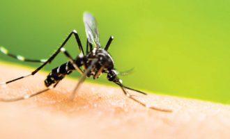 Πώς να προστατευτείτε από τα κουνούπια με φυσικό τρόπο-featured_image