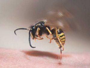 τσιμπημα απο μελισσα μελισσας τσιμπημα σφηκας