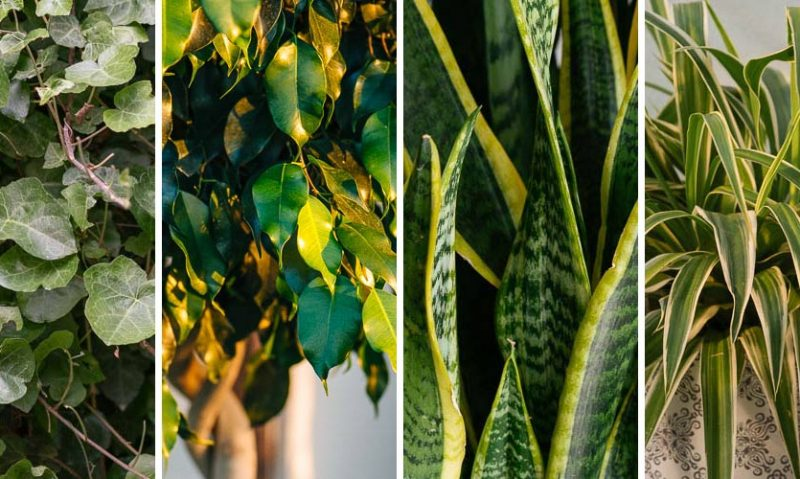 8 φυτά που καθαρίζουν τον αέρα στο σπίτι, από τον Κώστα Λιονουδάκη-featured_image