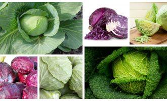 Λάχανο: διατροφική αξία, πώς να το διαλέξετε, πώς να το μαγειρέψετε-featured_image
