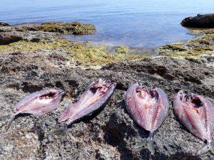 γουνα παριανη ψαρι στον ηλιο